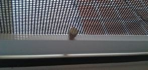 Штоковая москитная сетка